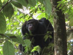 Tess Croner in Rwanda, part 2