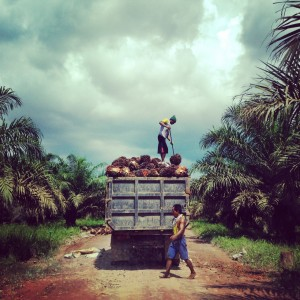 We pass some workers collecting palm oil fresh fruit bunches as we bump along this concession road.