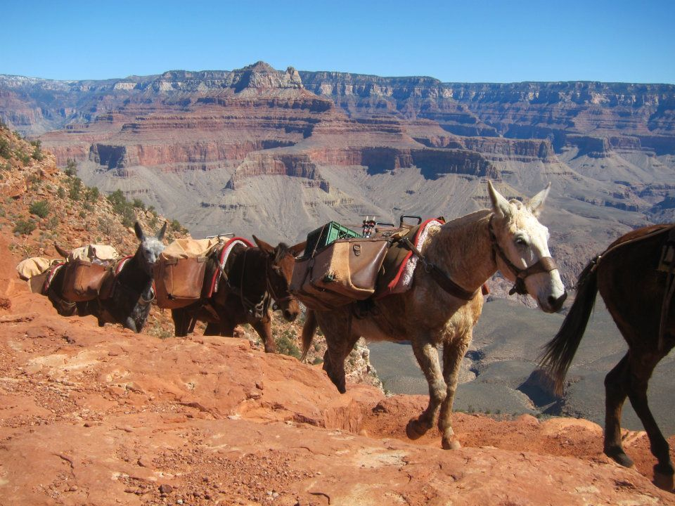 The bottom of the canyon is accessible only by foot and mule. Photo by the author.