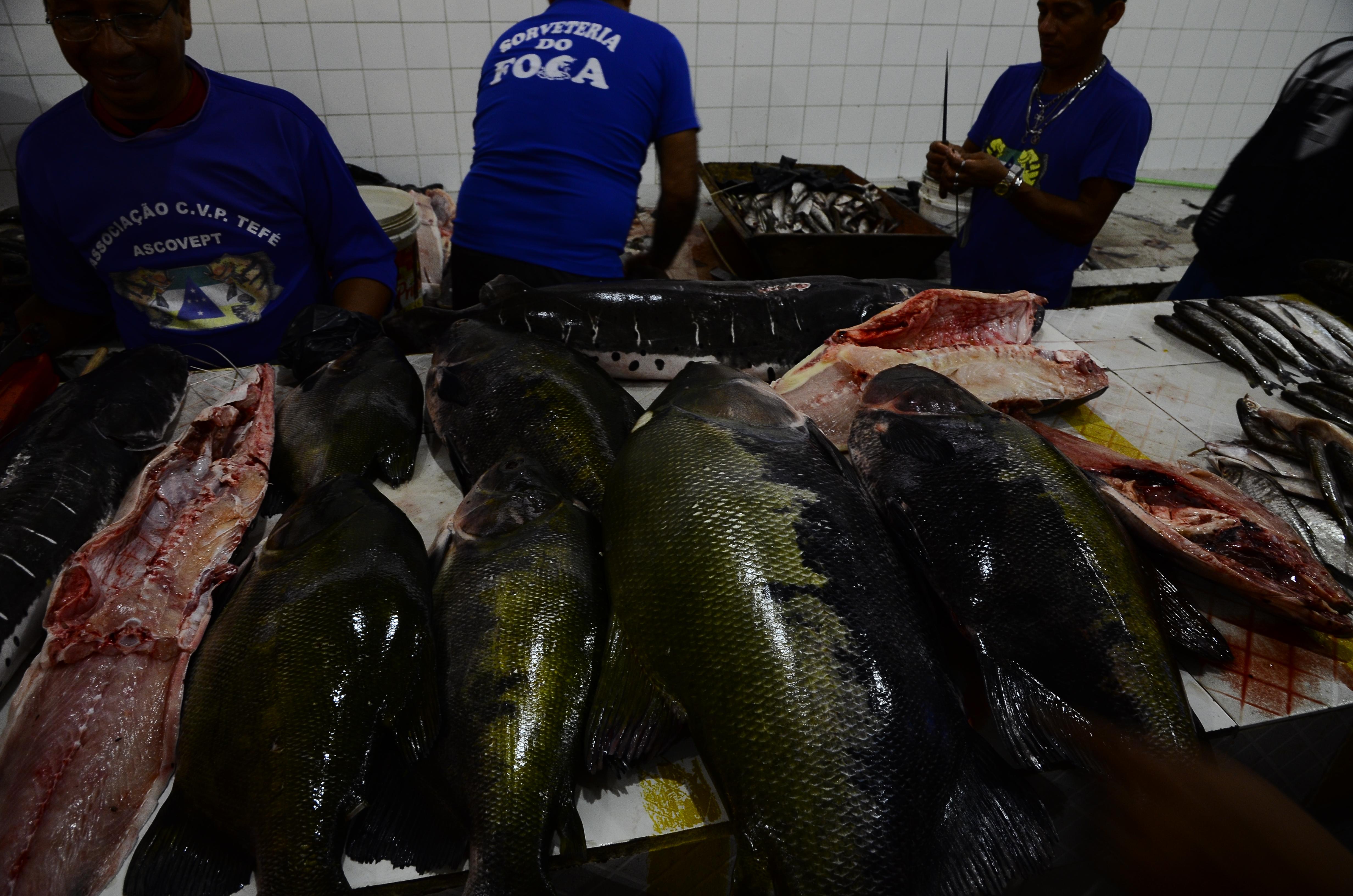 Fish market in Tefé.